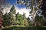 Trees in the country stock by CathleenTarawhiti