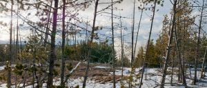 Forest for the Trees by mybearjana