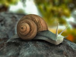 Snail by chromosphere
