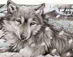 ACEO #24 : Grey wolf by SaidyWolf