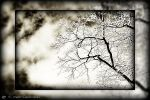 winter tree by mario-draco