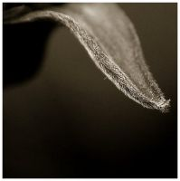 Life Is In The Details IV by GreenEyedHarpy
