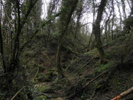 another forest landscape by Cippman