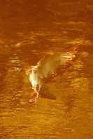 a bird in the river by JAKOKTO