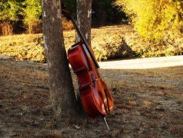 Cello. by BabsxStock