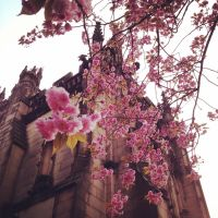 Blossoming Cathedral by jen-den1