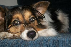 Four Eyes by Colliequest