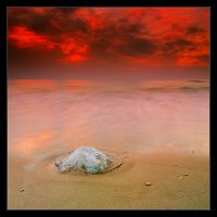 The Dead of The Jellyfish by IgorLaptev