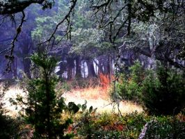 Fog through the trees by TheGerm84