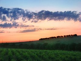 About the TreeLine + vineyards by Mikeleus
