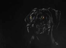Black Lab' by resistanceispointles