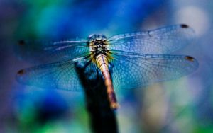 Dragonfly 2 by zzaarr-stock