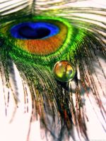 Peacock Feather III by Chocolate-Pict