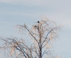 The Bird in the GlassTree 4 by Kattvinge