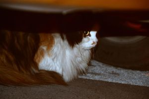 Day 248: Stray Cat by coolwanglu