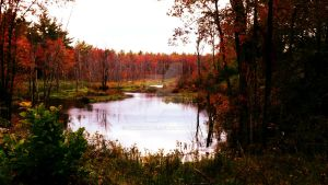 First Day of Fall by Carolyn-B