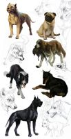 dog studies by akreon