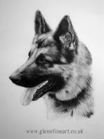 German Shepherd by Dhekalia