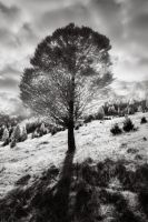Landscape with tree by Floriandra