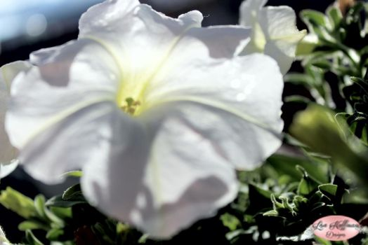 White flower by lisahuffman2001