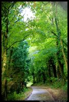 My Green Forest by Emilie25