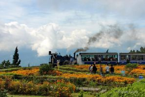 Dargeeling Train by naveenbanga