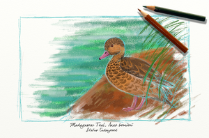 EA Project 1: Madagascar Teal by meihua