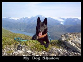 "My Dog ""Shadow"" by Sjanten"