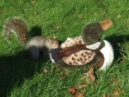 Squirrel And Duck by Dancing-Earth