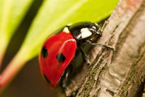 Ladybird on the stem by PetrSvoboda91