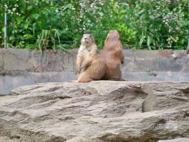 Prairie Dog Dramatics by CiberyanEyes