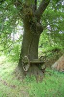 Tree with wheels by Barefeet-in-the-rain
