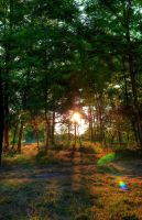 Woodlands by Jointor