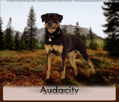 Audacity-Rotties by FamousShamus109