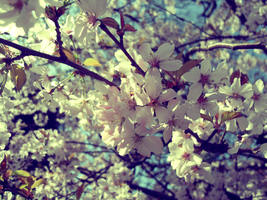 Spring Blossom by Johnnys-Fan