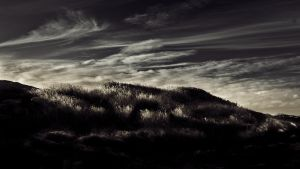 La Perouse Grass by andrewkevin