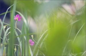 lost in the grass by prismes