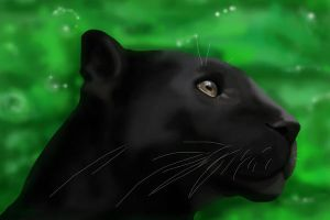 Panther by Petra87