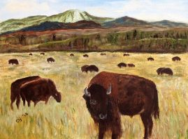 Wyoming Bisons by CarolynYM