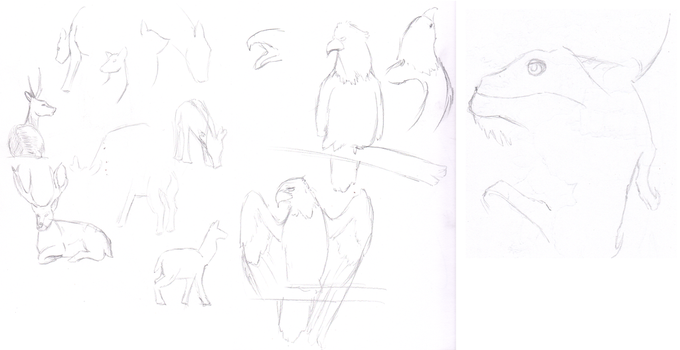 Quick Sketches from the Zoo by KKLeslie
