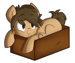Inside the Box of Cuteness by NolyCS