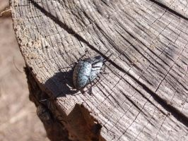 Horny New Mexican Beetles by gigatwo