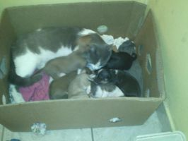 my cat and the puppies by sonicthehedgehog1345