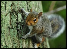 Unsure Squirrel by Somebody-Somewhere