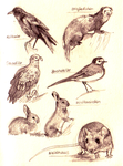 Animal Study by Shotechi