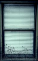window by PlanetTELEX01