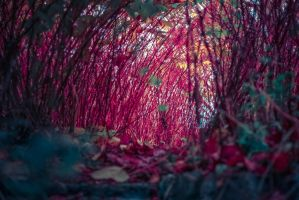 Red tunnel by Mabeysomeday