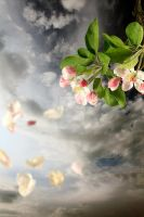spring wind by Floriandra
