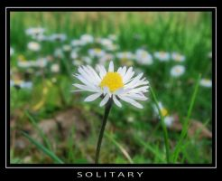 Solitary by Stevie73