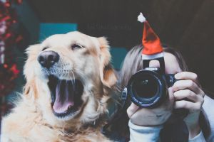 85/365 Christmas Yawn by photographybyteri